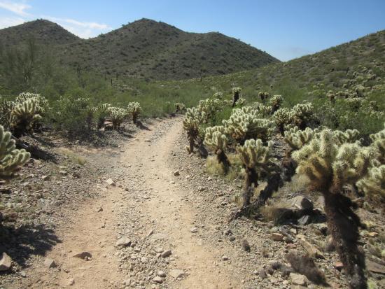 Desert Vista Trailhead