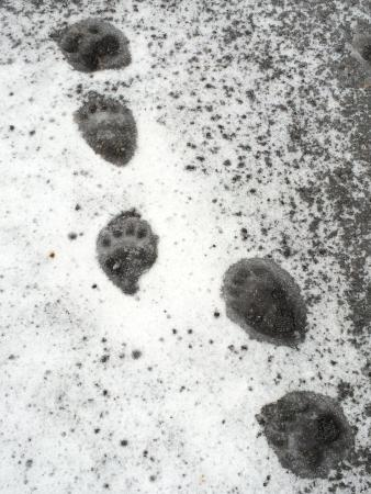 The Lodge at Obexer's: Bear Tracks at the Lodge