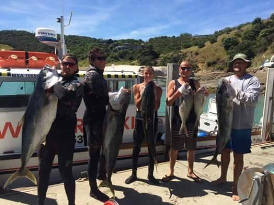 Isla Waiheke, Nueva Zelanda: Spearfishing Chanel Island