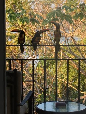 Hotel Parador: Aracaris came right to our balcony.