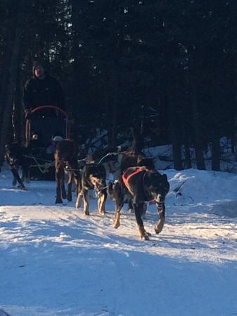 Fairbanks Dogsled Rides