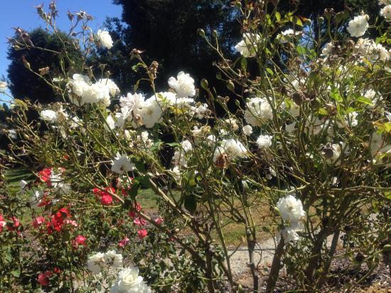 แทสมาเนีย, ออสเตรเลีย: Outside garden