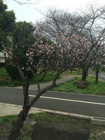 Sendai Horikawa Park