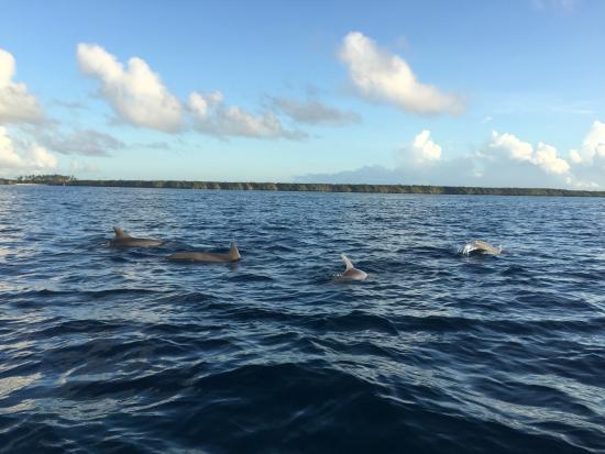 Kizidolphintours day tours: Dolphins