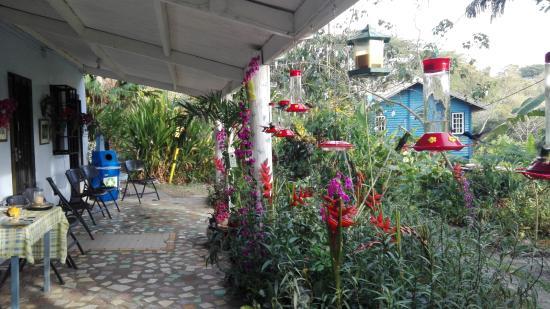 Adventure Eco Villas: Haupthaus Veranda zur Vogelbeobachtung