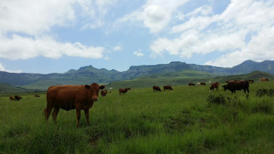 uKhahlamba-Drakensberg Park, Νότια Αφρική: 20160209_121031_large.jpg