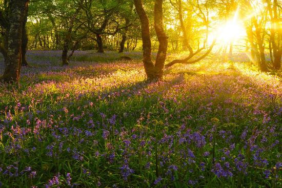 Nature Scotland