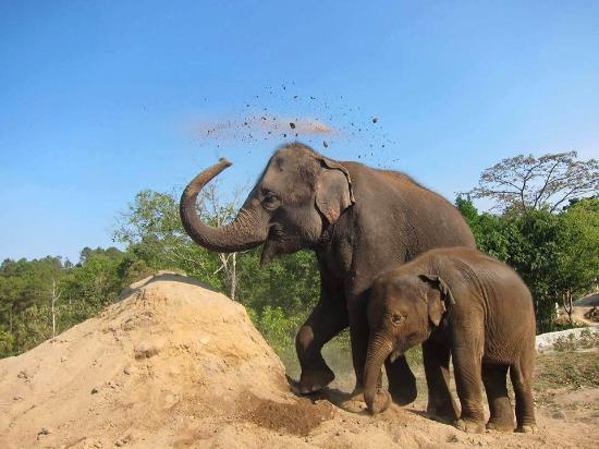 Blue Elephant Thailand Tours