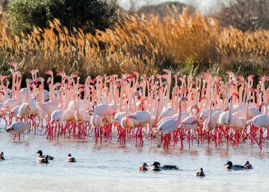Arles, Fransa: Flamingos! Picture taken by my husband Neil Hayward.