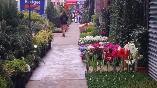 Hilton Garden Inn New York/Manhattan-Chelsea: Flower district photos