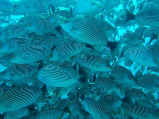 Drake Bay, Costa Rica: Costa Rica Adventure Divers