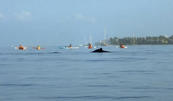 Maui Ocean Sports