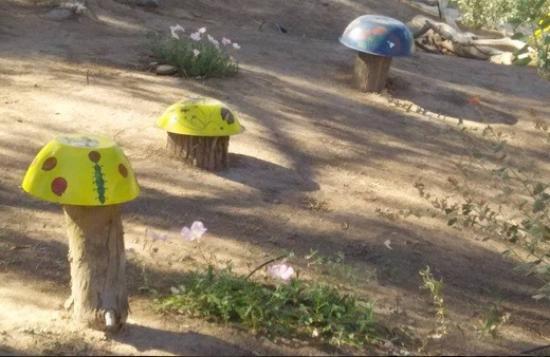 Yuma, AZ: Fungus in the garden