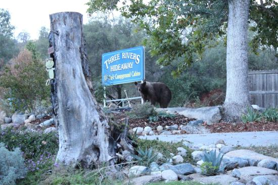 Three Rivers Hideaway: Bear