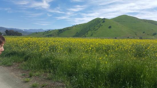 Porterville, كاليفورنيا: 20160310_130657_large.jpg