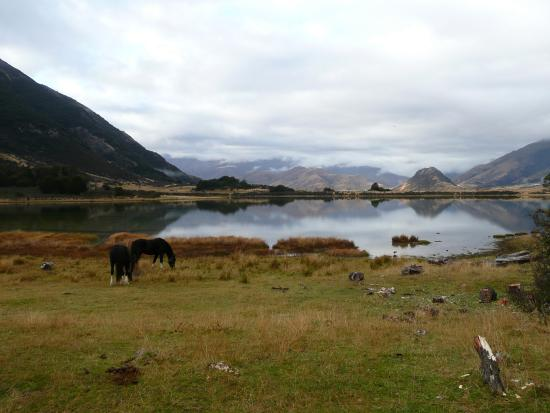 Hawarden, Neuseeland: Pack horses waiting to be saddled in front of Little Mason Lake