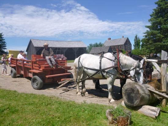 Lower Prince William, Canadá: Letting the horses rest before taking people for their FREE riding back and forth at King's Land