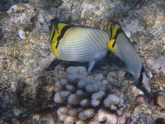 photo1.jpg - Picture of Reef Experience, Cairns - TripAdvisor