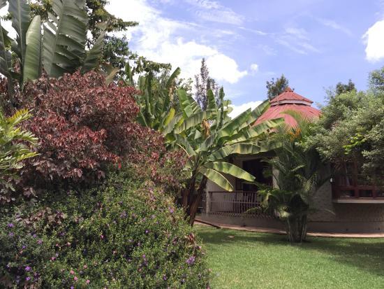 Planet Lodge: Plants attracting birds