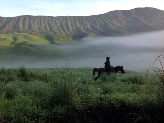 OURTRIP1st - Day Tours: Bromo savannah horse-riding