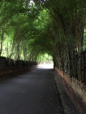 Cudowny kameralny hotel!Ma swój klimat,piękne stare bonsai i piękny ogród.Przemiła i bardzo pomo