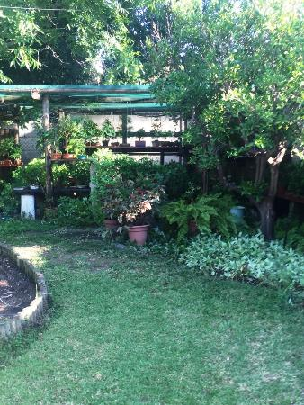 Sophia's Bed and Breakfast: The lovely garden