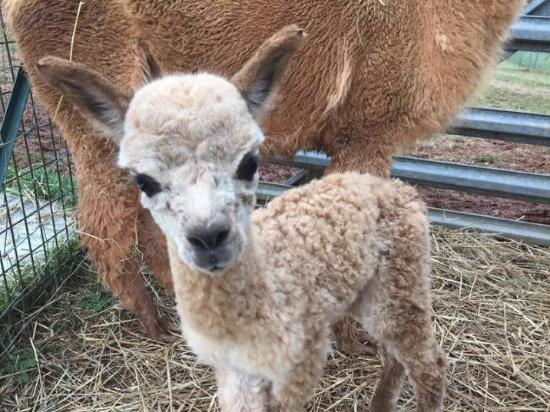 Hardy, VA: One of the new babies on the farm-there are always babies!