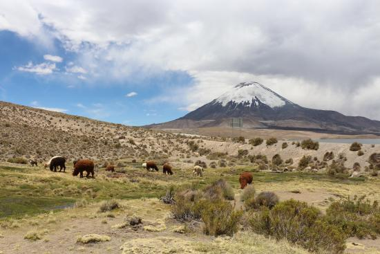 Lauca National Park 사진