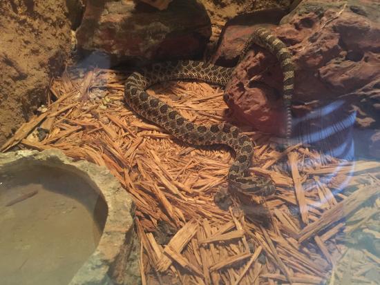 Rattlers & Reptiles : photo6.jpg