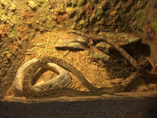 Rattlers & Reptiles : photo8.jpg