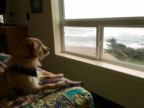 Lincoln City, OR: Baxter uses the doggie blanket and enjoys the view from the bed.