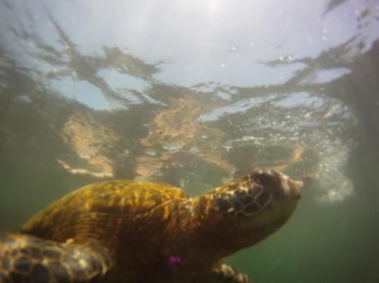 Puerto Villamil, Equador: photo2.jpg