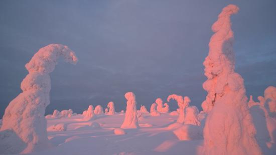 Ruka, Finland: The Snow crowned trees during a snowshoe tour