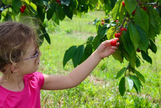 Rennie Orchards: Plenty were low enough for kids to reach
