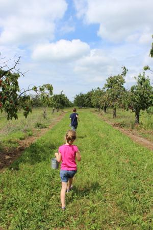 Rennie Orchards: An awesome family day:)