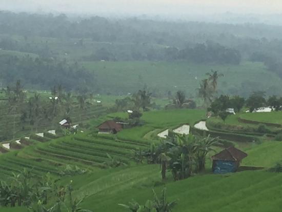 Warung Dhea, Jatiluwih : Prachtige rijstvelden