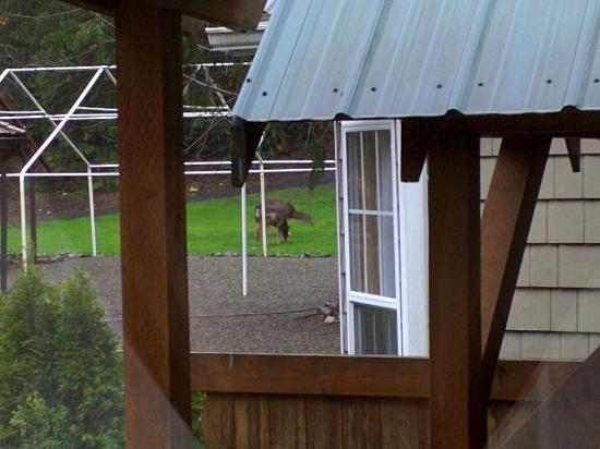 Robin Hood Village: Deer Grazing