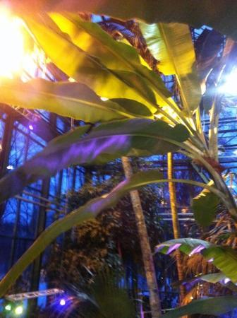 какие деревья растут в москве фото