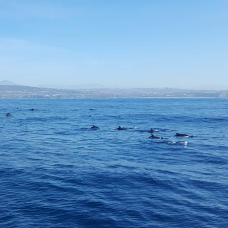 Dana Point, Califórnia: Saw tons of dolphins on this cruise!