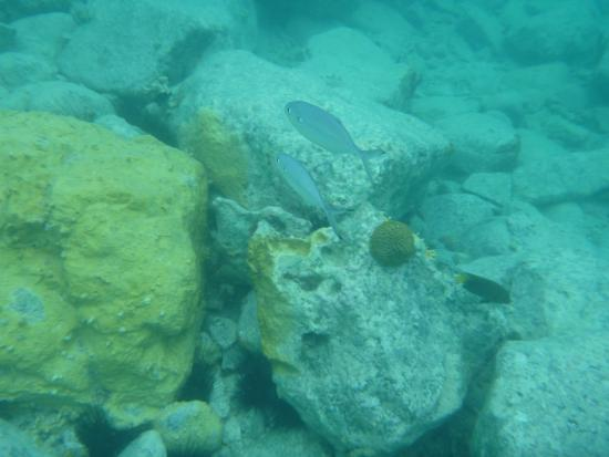 Sand Dollar Snorkel Trip : More little Creole Rock fish.