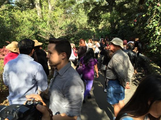 Descanso Gardens: About a million people here for the cherry blossom festival.