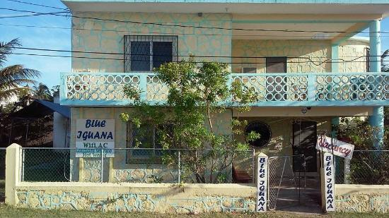 Blue Iguana Bed and Breakfast