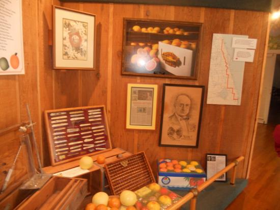 ‪Indian River Citrus Museum‬