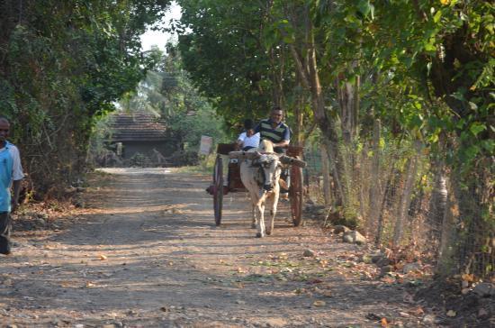 Samarth Krupa Agro Tourism Farm