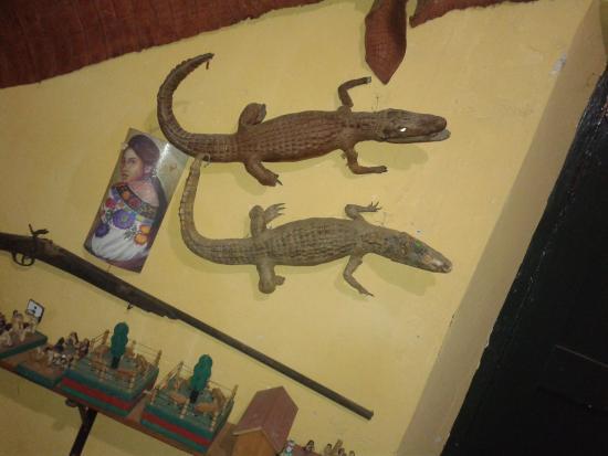 Museo de Trajes Regionales : Fauna de Chiapas