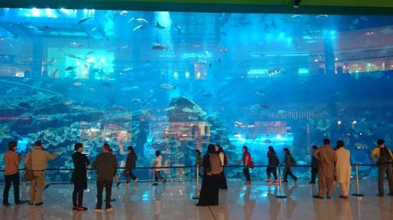 Aquarium at the entrance - Picture of Mall of the Emirates ...