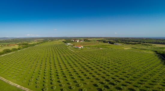 Savudrija, โครเอเชีย: Omajolas Olivenplantage