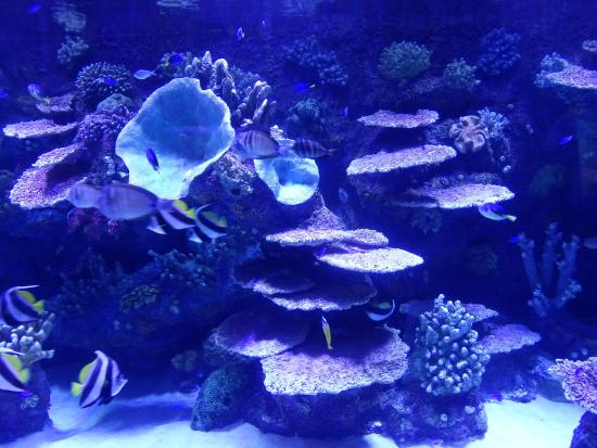 Aquarium - Picture of Antalya Aquarium, Antalya - TripAdvisor