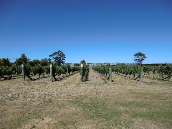 Martinborough Vineyard Image
