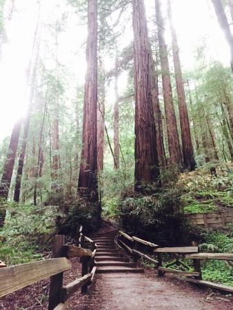 ‪Tom's Muir Woods Walking Tours‬